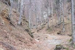 Inceput-traseu-Valea-Berii-4