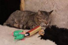 Pisicile-de-la-Ciucas-3