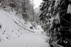 Traseu-Valea-Arpasului-Piciorul-Podragului-Cabana-Turnuri-4